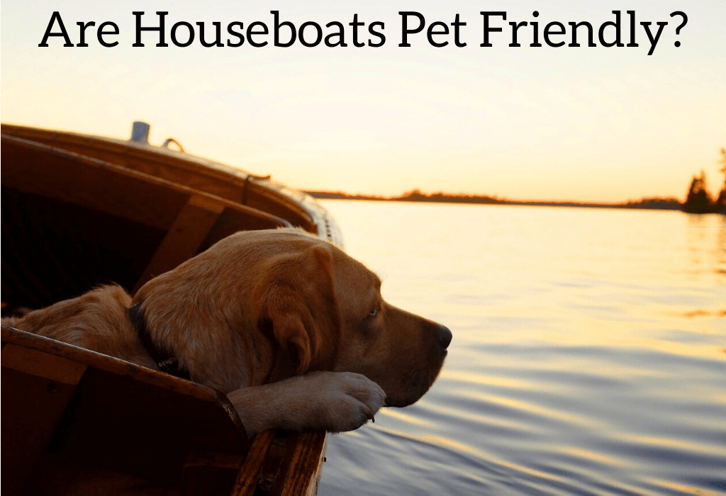 Are Houseboats Pet Friendly?